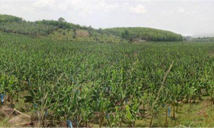 Gabon: le gouvernement et la FAO vont lancer le recensement général de l'agriculture (RGA) le 1er aout 2019